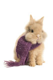 Bunny with a  scarf Royalty Free Stock Photos