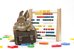 bunny at school Stock Photography
