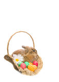 Bunny is sitting in a basket with colored eggs Royalty Free Stock Photos