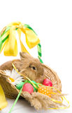 Bunny is sitting in a basket with eggs Stock Images