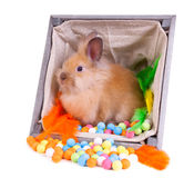 Bunny sitting inside a vintage wooden box with col Stock Images