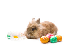 Bunny is sitting near colored egg Stock Photos