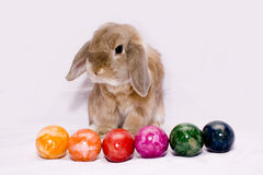 Bunny with six colored eggs Royalty Free Stock Images