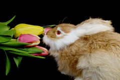 Bunny Sniffer Royalty Free Stock Photos
