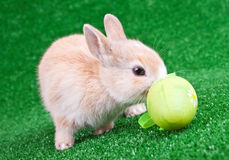 Bunny sniffing an easter egg Royalty Free Stock Photo
