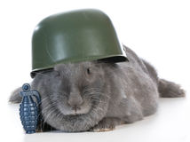 Bunny soldier Royalty Free Stock Photos
