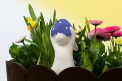 Bunny in spring Stock Photos