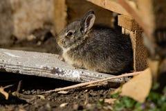 Bunny Sunbathing Arkivbilder