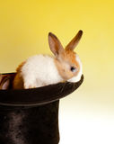 Bunny in a top hat stock photos