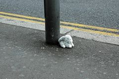 Bunny Toy Left bourré sur la rue de Londres Photo stock