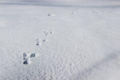Bunny Tracks i snö Arkivbild