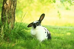 Rabbit on the grass. Bunny and tree on the grass Royalty Free Stock Photography