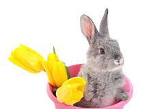 Bunny with tulip isolated on white Royalty Free Stock Photos