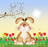 Bunny in the tulips field. Illustration of bunny in the tulips field Stock Images
