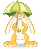 Bunny with umbrella Royalty Free Stock Photos
