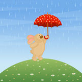Bunny with umbrella Royalty Free Stock Images