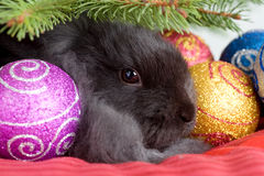 Bunny under the christmas tree stock images