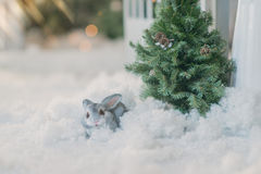 Bunny under the tree in the snow Royalty Free Stock Images