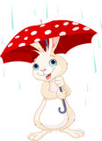 Bunny under umbrella Royalty Free Stock Image