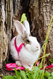 Bunny. White bunny with pink ribbon stock photos