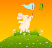 Bunny With Butterfly Royalty Free Stock Photos
