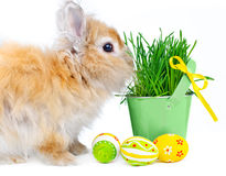 Bunny With Easter Eggs Stock Photography