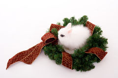 Bunny and wreath Royalty Free Stock Images