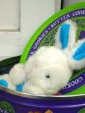 Bunny2 Стоковые Фото