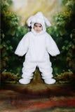 bunny3复活节 库存照片