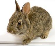 Bunny3 Stock Photo