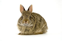 Bunny6 Stock Images