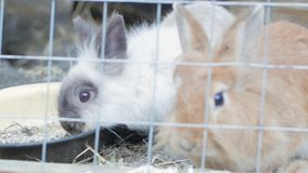Bunnys portrait. Close up portraits of bunny in the cage stock footage