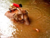 Bunong Elefant-Bad in Mondulkiri Stockfotografie