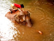 Bunong Elephant Bath in Mondulkiri Stock Photography