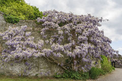 Bunratty Castle & Folk Park Stock Images