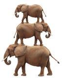 Bunt av afrikanska elefanter arkivbilder