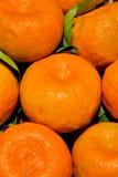 Citruset som presenterat färgar och mönstrar arkivfoto