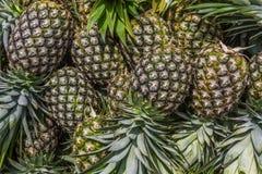 Bunt av nya ananors på en marknad Royaltyfri Foto