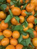 Bunt av nya mandarines Arkivbilder