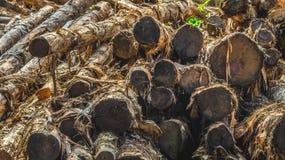 Bunt av trä Arkivbild