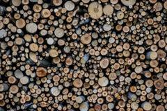 Bunt av tr? Journaltextur fotografering för bildbyråer