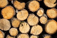 Bunt av wood journaler Arkivfoton