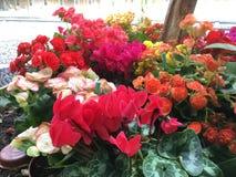 Bunt Blume lizenzfreie stockbilder