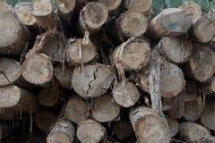 Bunt för främre sikt för detalj för Cutted trädjournaler Royaltyfria Foton