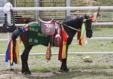 Bunt gekleidetes tibetanisches Pferd Stockfoto