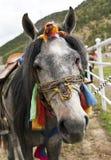 Bunt gekleidetes tibetanisches Pferd Lizenzfreie Stockfotografie