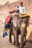 Bunt gemalter Elefantstamm mit Reiter stockbilder