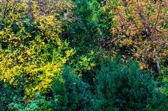 Bunt vom Herbstlaub Stockfotografie