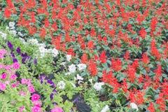 Bunt von den Blumen grünen Sie, Weiß und Rot Stockfotografie
