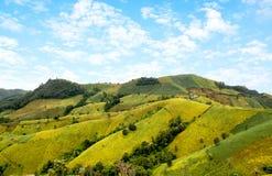 Bunt von den Feldsojabohnenölbohnen auf Berg Stockfotos